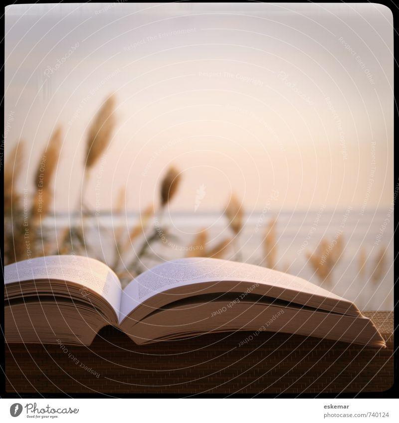 lesen am Meer Natur Ferien & Urlaub & Reisen Sommer Meer Erholung Landschaft Küste Freizeit & Hobby offen Insel Buch Spanien lesen Balearen Mittelmeer Printmedien