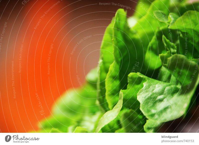Evergreen Salat Salatbeilage Ernährung Mittagessen Bioprodukte Vegetarische Ernährung Diät Gesunde Ernährung Landwirtschaft Forstwirtschaft Gastronomie Pflanze
