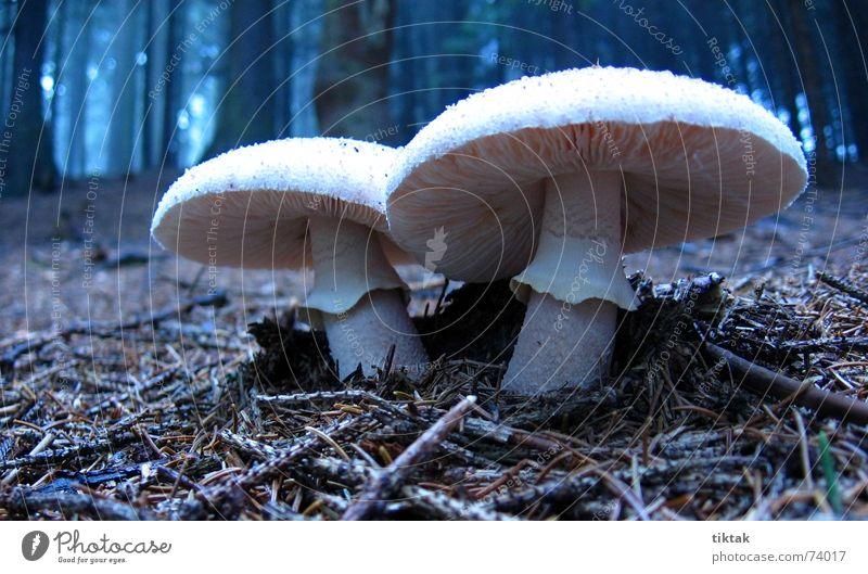 Zwillinge Natur weiß ruhig Wald dunkel Erholung Herbst 2 Wachstum paarweise Jahreszeiten Pilz Gift Vorsicht unheimlich Zwilling