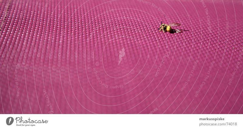 abgestürzt Garten Stuhl violett Insekt Biene Sturz Wespen