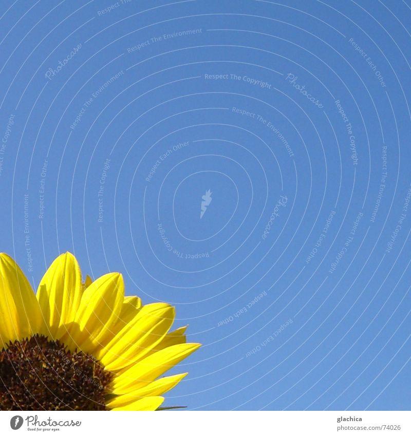 Sommer gelb_blau Sonnenblume Blume Herbst Fröhlichkeit Gute Laune Landschaft Freude Blühend Himmel Schönes Wetter Garten Glück Leben Happy Freiheit Natur