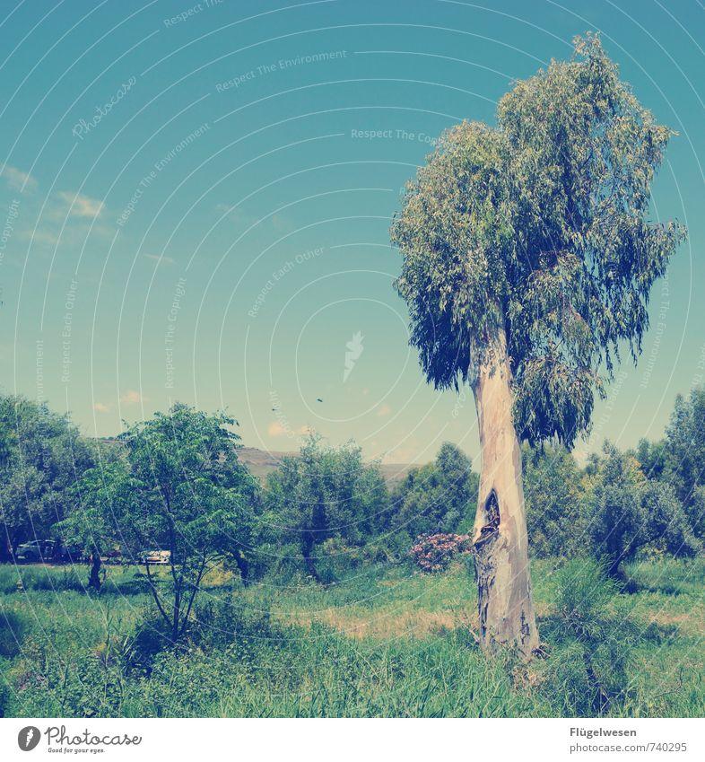 Sommertag Ferien & Urlaub & Reisen Tourismus Ausflug Abenteuer wandern Umwelt Natur Landschaft Himmel Klima Schönes Wetter Pflanze Baum Garten Park Wiese