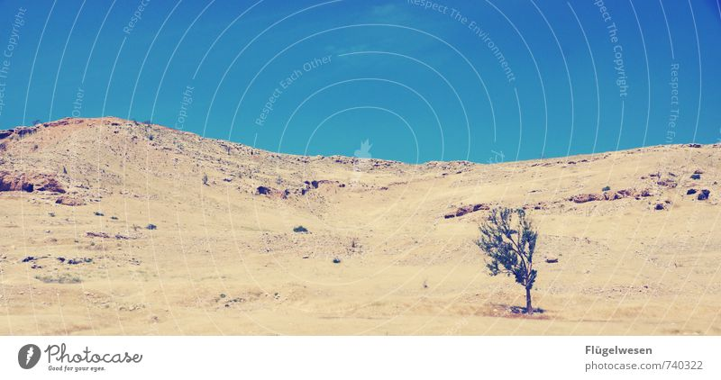 Blühende Landschaften Natur Ferien & Urlaub & Reisen Sonne Baum Landschaft Ferne Strand Umwelt Berge u. Gebirge Wärme Tod Freiheit Sand Tourismus Klima Ausflug
