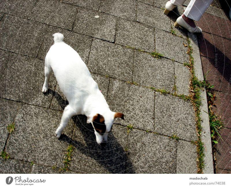 NA HUND!   dog animal tier gassi frauchen urban haustier Hund alt Stadt Tier Straße Linie süß Bodenbelag Spaziergang Asphalt Quadrat Haustier Fußgänger Liebling