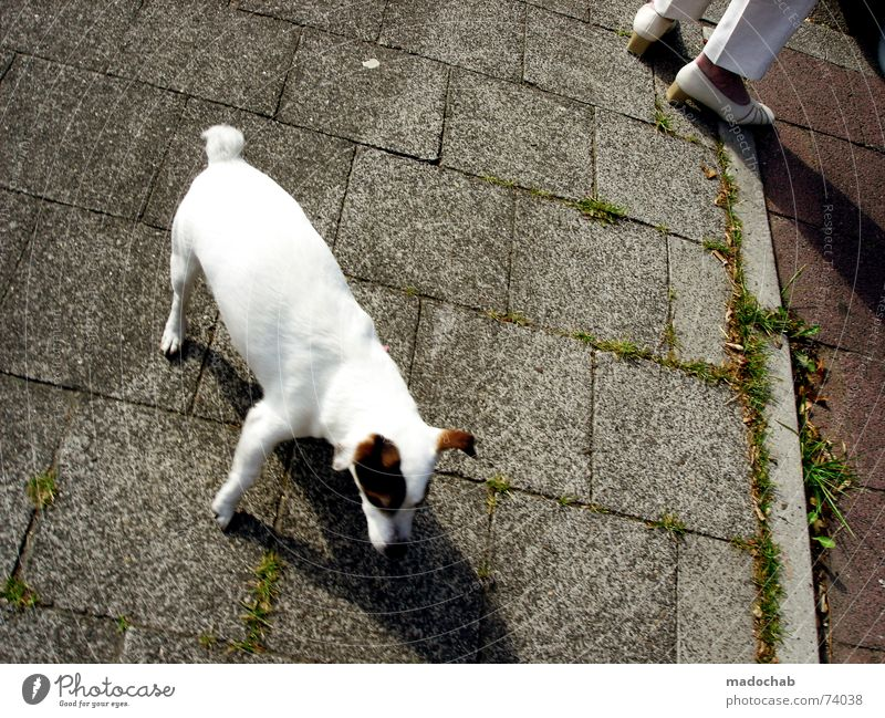 NA HUND! | dog animal tier gassi frauchen urban haustier Fußgänger Asphalt Hund Mischling tratschen Stadt Liebling süß Pinkler dressieren Muster Quadrat Tier