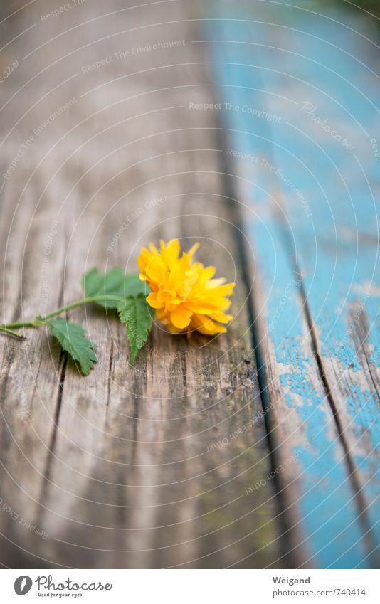 Blumengold Holz Erholung leuchten verblüht außergewöhnlich Glück gelb Freude Fröhlichkeit Zufriedenheit Lebensfreude Frühlingsgefühle Vorfreude Begeisterung