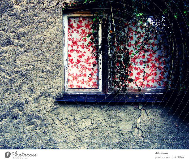 -- rot dunkel Wand Fenster Vorhang Rahmen Efeu