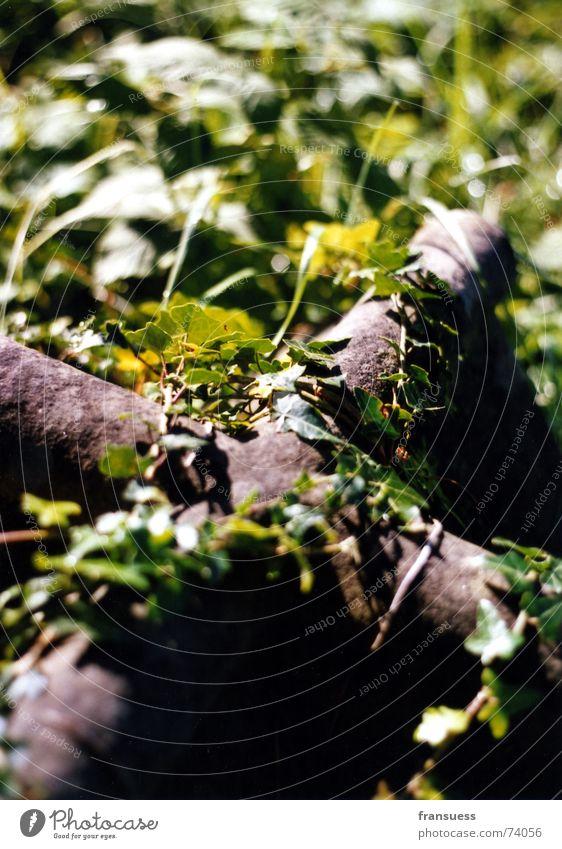 und ewig rankt der efeu alt Pflanze Tod Religion & Glaube Metall Rücken modern Rost Friedhof Grab Ranke Efeu umschlungen Oxidation
