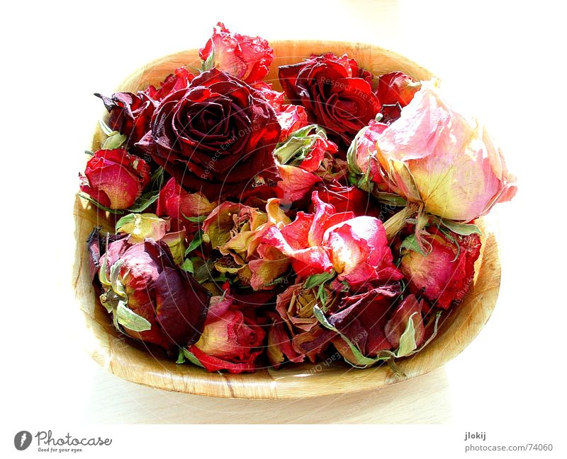 Farbklecks Natur alt rot Pflanze Holz Blüte Stimmung hell Tisch Romantik Rose weich zart Freisteller Schalen & Schüsseln Korb