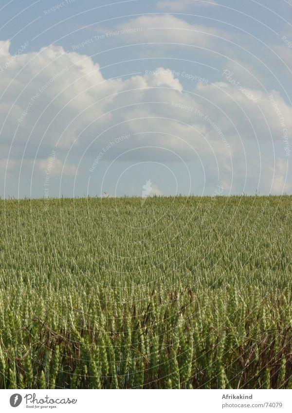 Getreidefeld Feld Wolken Weizen Himmel Ernte Natur Kornfeld