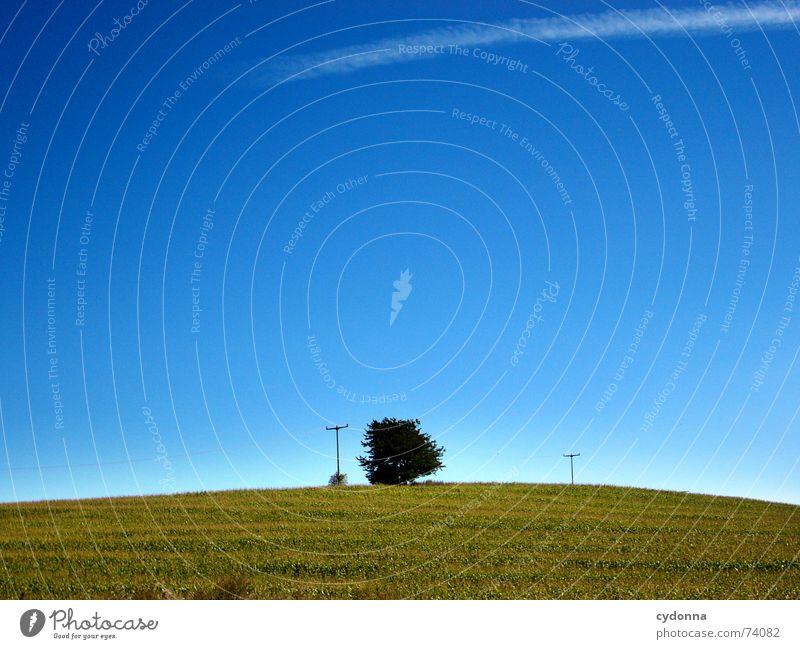 Himmelszelt I Feld Baum minimalistisch Strommast Oberleitung schön Ferne Sommer Stimmung Farbverlauf Luft ruhig Mais Natur blau Klarheit Bodenbelag leer Ausflug