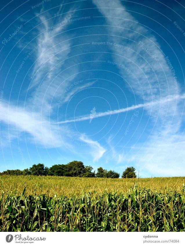 Sommerfeld Feld minimalistisch schön Ferne Stimmung Farbverlauf Luft ruhig Wolken Streifen Horizont Baum Himmel Mais Natur blau Klarheit Bodenbelag leer Ausflug