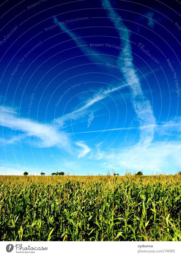 Sommerfeld I Feld minimalistisch schön Ferne Stimmung Farbverlauf Luft ruhig Wolken Streifen Horizont Himmel Mais Natur blau Klarheit Bodenbelag leer Ausflug