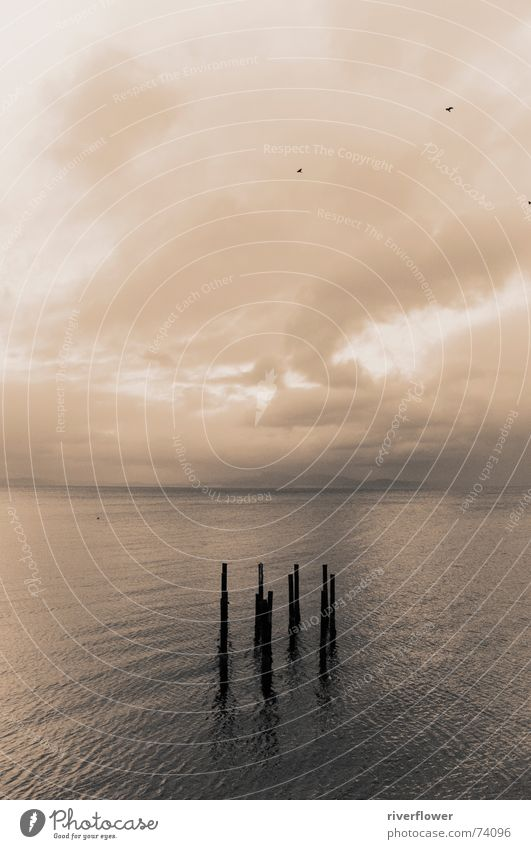 Fjordsymbiose six Natur Wasser Himmel Meer Wolken Einsamkeit Norwegen Sepia Trondheim