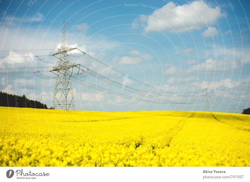 Sommermeer Landschaft Himmel Wolken Schönes Wetter Baum Nutzpflanze Raps Rapsfeld Feld Blühend Duft blau gelb grün weiß Energie Idylle Natur Umwelt Strommast
