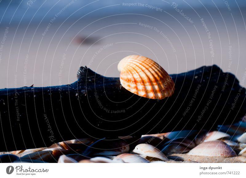 Am Strand Umwelt Natur Landschaft Erde Schönes Wetter Küste Meer Ferien & Urlaub & Reisen Freizeit & Hobby Tourismus Muschel Muschelschale Mittelmeer Sandstrand