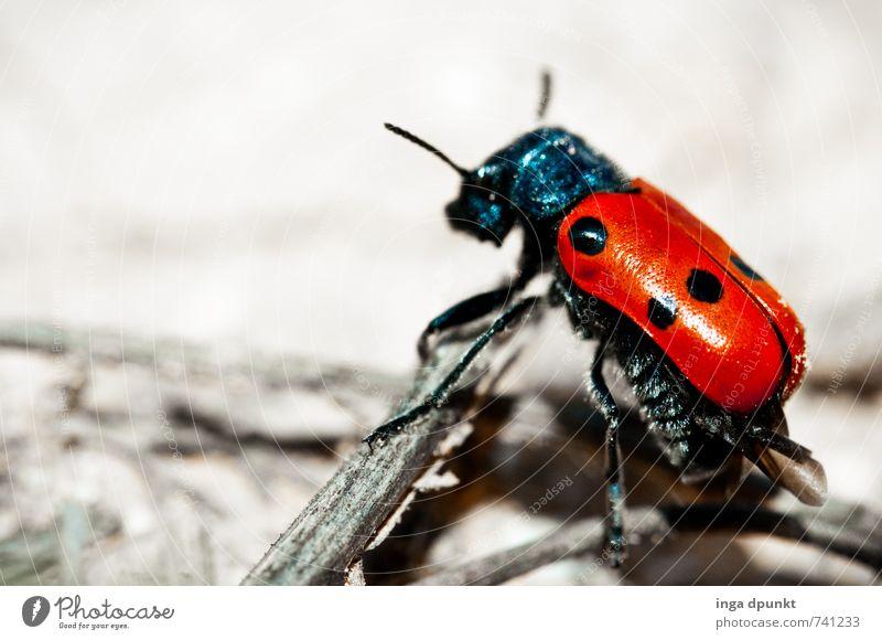Ueber Holz und Stein Natur Sommer Landschaft Tier Umwelt Felsen Erde Schönes Wetter Urelemente Wüste Insekt Käfer krabbeln Marienkäfer Fühler Gliederfüßer