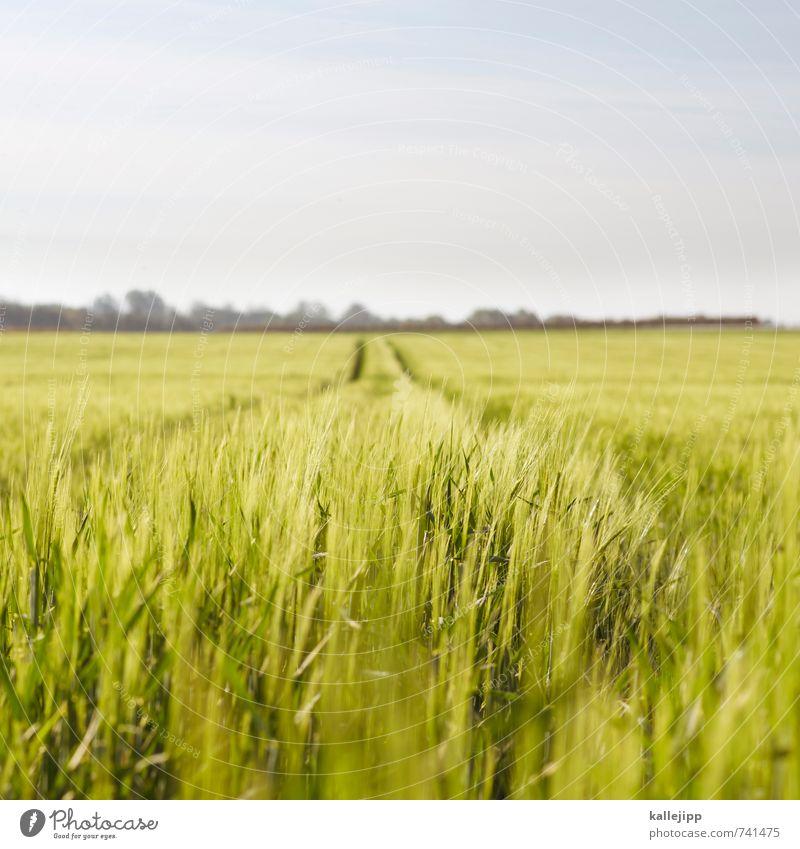 der sommer ist da Natur grün Pflanze Landschaft Tier Umwelt Wege & Pfade Wetter Feld Klima Ernährung Landwirtschaft Spuren Beruf Getreide Futurismus