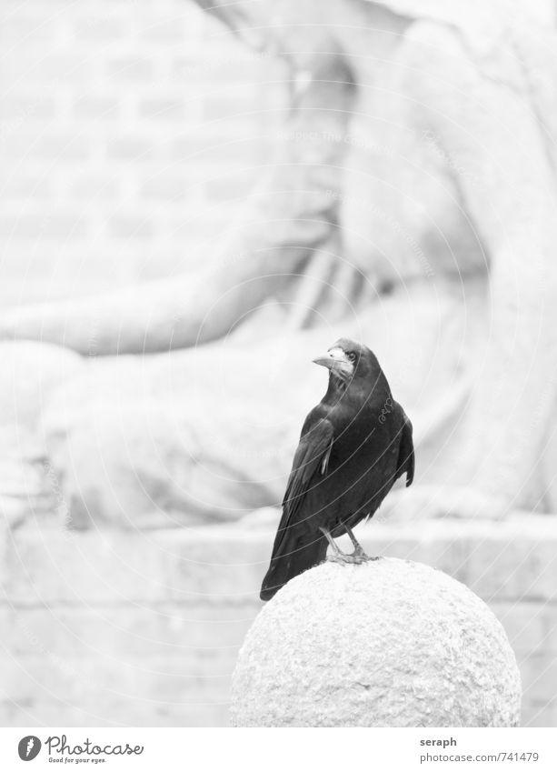 Rabe Tier Vogel Flügel Denkmal Skulptur Bildhauerei Feder Friedhof Rabenvögel Kolkrabe Krähe sitzen beobachten aussruhen Tod Leben mourn Traurigkeit Schnabel