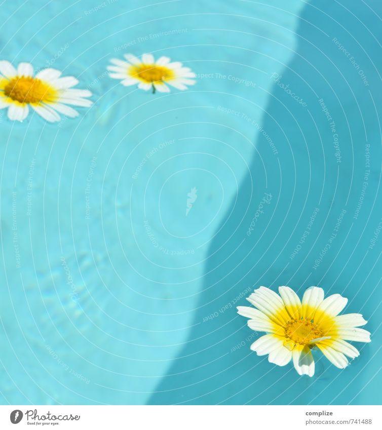 finally turquoise Ferien & Urlaub & Reisen schön Pflanze Sonne Erholung Blume ruhig gelb Leben Schwimmen & Baden Gesundheit frisch genießen Fitness Wellness