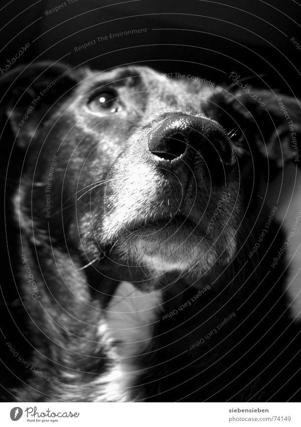 Lina Natur schwarz Tier Auge Leben Hund Wärme Nase verrückt außergewöhnlich weich Fell nah Freundlichkeit Lebewesen Säugetier