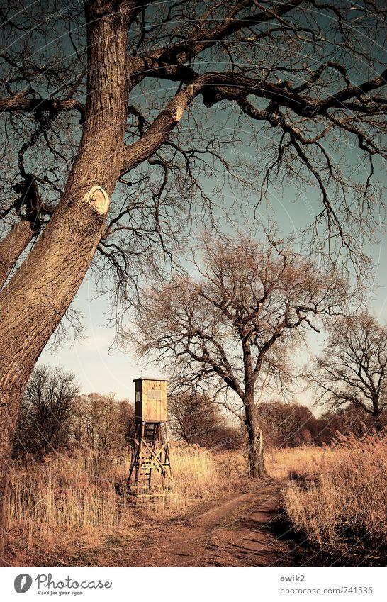 Jägerlateinschule Freizeit & Hobby Jagd Umwelt Natur Landschaft Pflanze Himmel Horizont Wetter Schönes Wetter Baum Sträucher Ast Bauwerk Gebäude Hochsitz