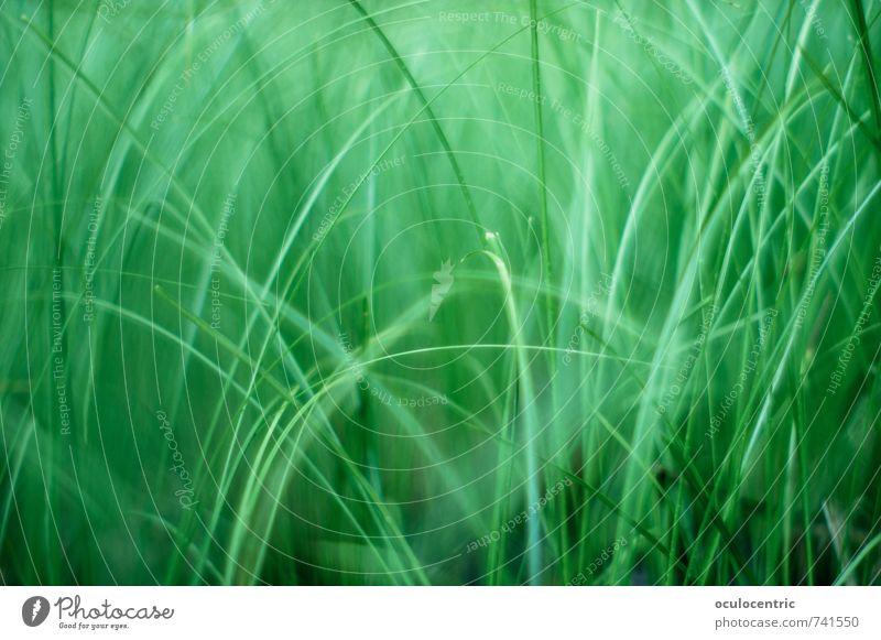 Mikro-Dschungel Umwelt Natur Pflanze Frühling Sommer Gras Blatt Wildpflanze Rasen Garten Park Feld Wachstum ästhetisch grün Warmherzigkeit träumen Erholung
