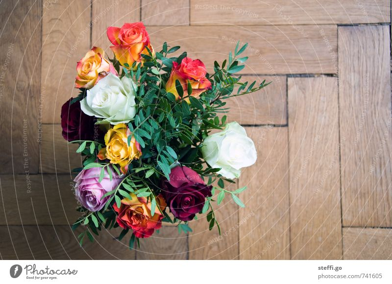 Happy Birthday I Feste & Feiern Valentinstag Muttertag Hochzeit Geburtstag Pflanze Blume Rose Grünpflanze Duft elegant frisch Kitsch natürlich Lebensfreude