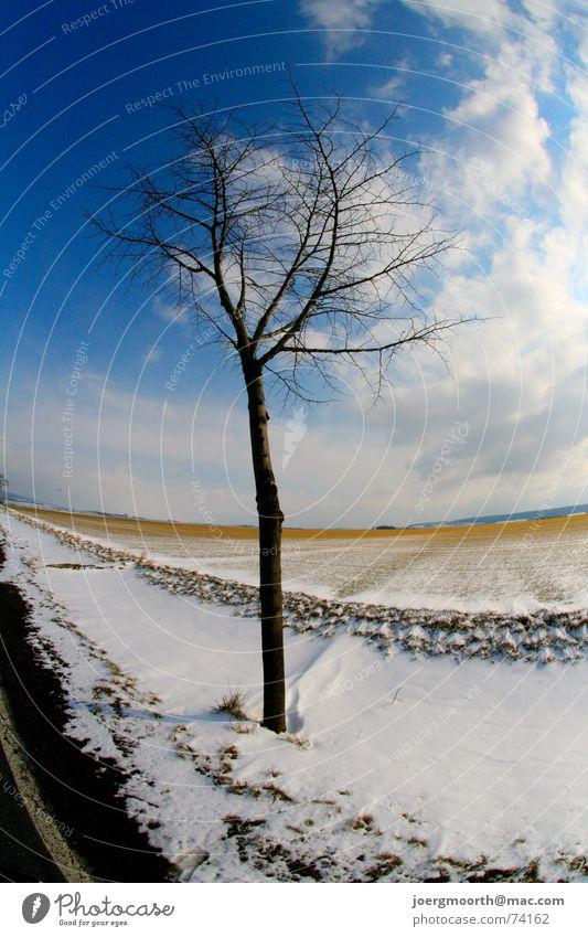 Baum Himmel Sonne blau Winter Wolken Straße kalt Schnee Landschaft Stimmung Feld