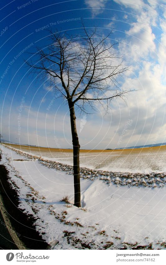 Baum Wolken Feld Stimmung kalt Winter Schnee Straße blau Himmel Landschaft Sonne