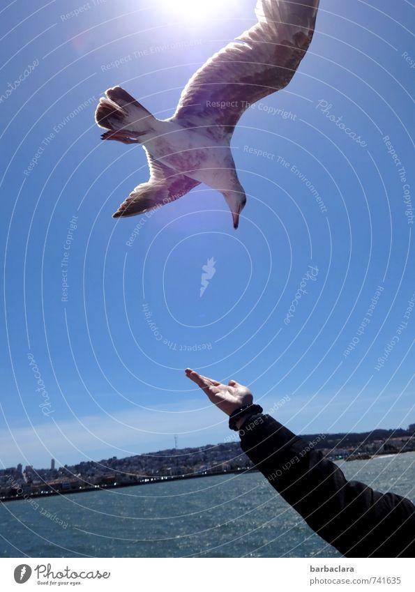 Verlockung | verlockendes Angebot Mensch Himmel blau Stadt Wasser Sonne Meer Hand Freude Tier fliegen Vogel Arme Tourismus Vertrauen Appetit & Hunger