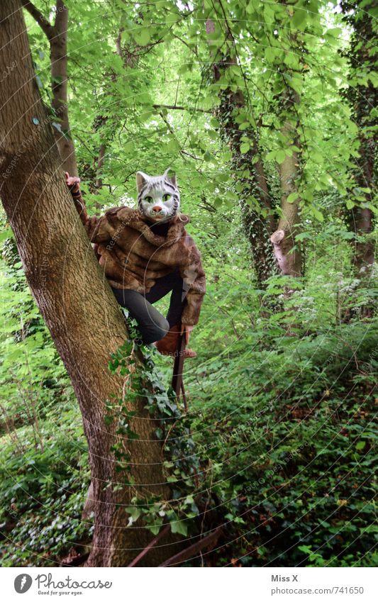 Miau Mensch androgyn 1 18-30 Jahre Jugendliche Erwachsene Natur Baum Efeu Wald Urwald Tier Wildtier Katze sitzen wild Maske Tiergesicht Katzenkopf verkleiden
