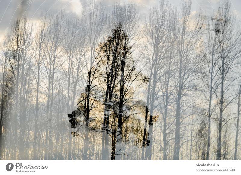 In den dunkelsten Stunden Himmel Natur Pflanze Baum Einsamkeit Wolken Wald Umwelt außergewöhnlich träumen Kraft Wandel & Veränderung einzigartig Hoffnung