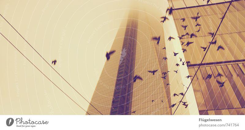 Aufgescheucht Ferien & Urlaub & Reisen Tier Ferne Architektur Gebäude Freiheit fliegen Vogel Wetter Nebel Hochhaus Tourismus Klima Ausflug Tiergruppe Abenteuer