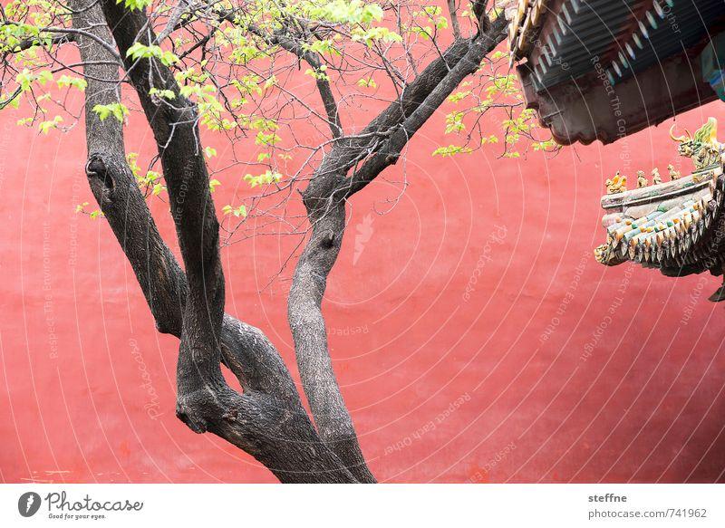 Orientalische Schönheit grün Baum rot Wand Mauer Baumstamm China Palast Blätterdach Peking Asiatische Architektur