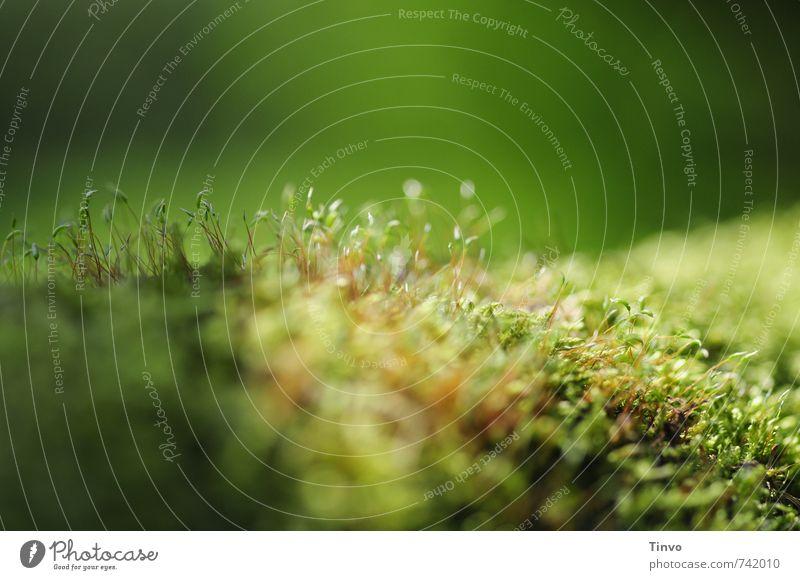 Alles fängt klein an Natur Pflanze grün Umwelt natürlich frisch zart Moos filigran fein