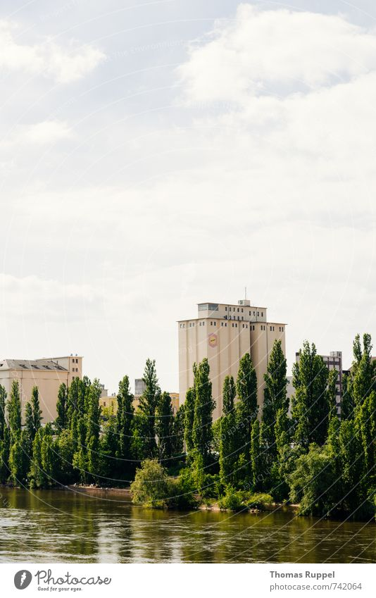 Hessentreffen 14 - Frankfurt im grünen II Natur Pflanze Wasser Himmel Wolken Schönes Wetter Baum Wald Küste Fluss Main Frankfurt am Main Deutschland Europa