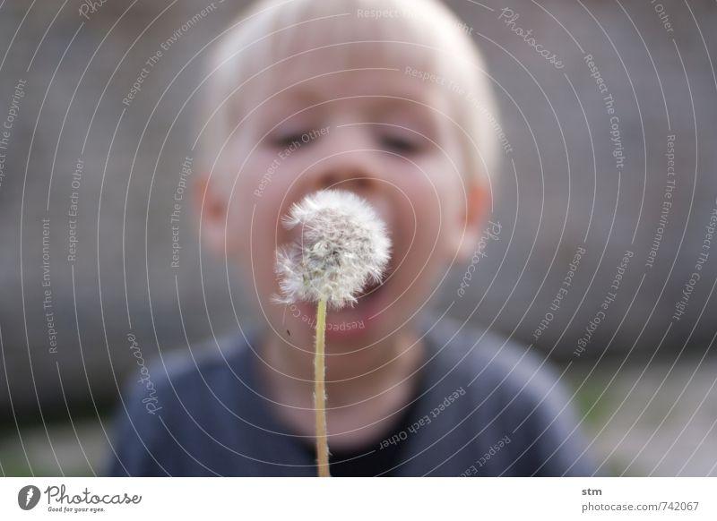 puste mal! (333) Mensch Kind Natur Pflanze Freude Leben Junge Spielen Freizeit & Hobby Familie & Verwandtschaft Kindheit blond Kreativität Lebensfreude Konzentration Kleinkind