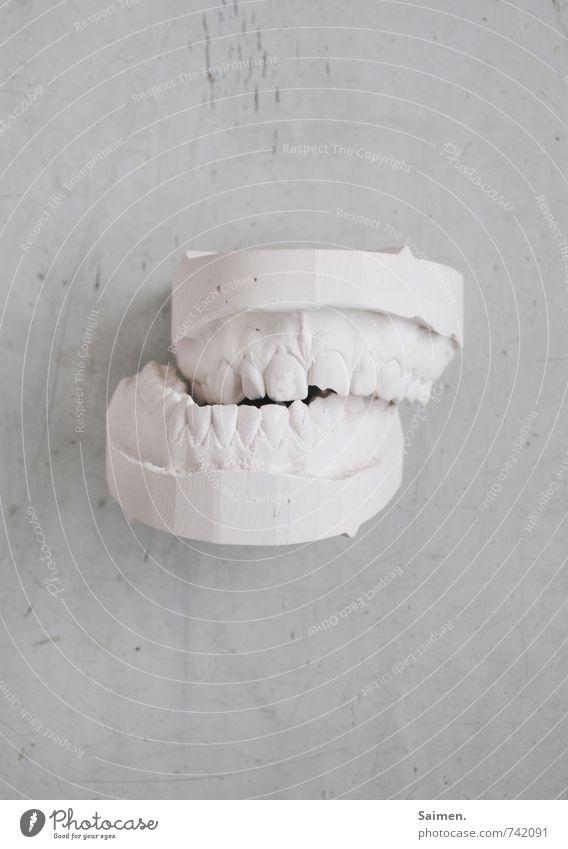 Zähneknirschen Mund Frustration Gesundheit kaputt Gips Abdruck gebrochen weiß hell Zahnarzt Zahnpflege Gebiss Zahnschmerzen Farbfoto Gedeckte Farben