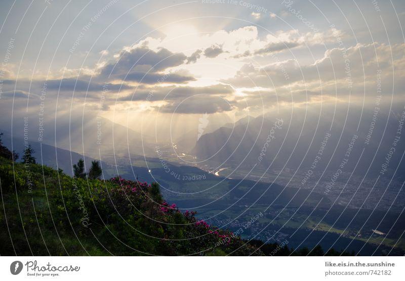 dem himmel so nah. Himmel Natur Ferien & Urlaub & Reisen Pflanze Sommer Erholung Landschaft Wolken Ferne Berge u. Gebirge Umwelt Freiheit Felsen