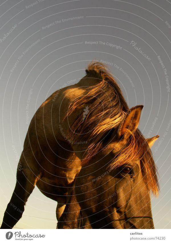 Charles der Gaul Pferd Mähne Nüstern wiehern Veterinär Wiese Sonntag ruhig Erholung Wunschtraum Himmel Frieden verrückt wendy Neigung