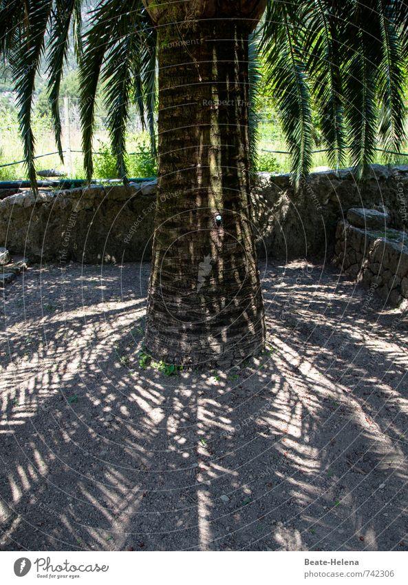 Palma de Mallorca Natur Sommer Pflanze Baum Palme Park Erholung genießen ästhetisch Gesundheit braun grün schwarz Zufriedenheit Geborgenheit Schatten Erhohlung