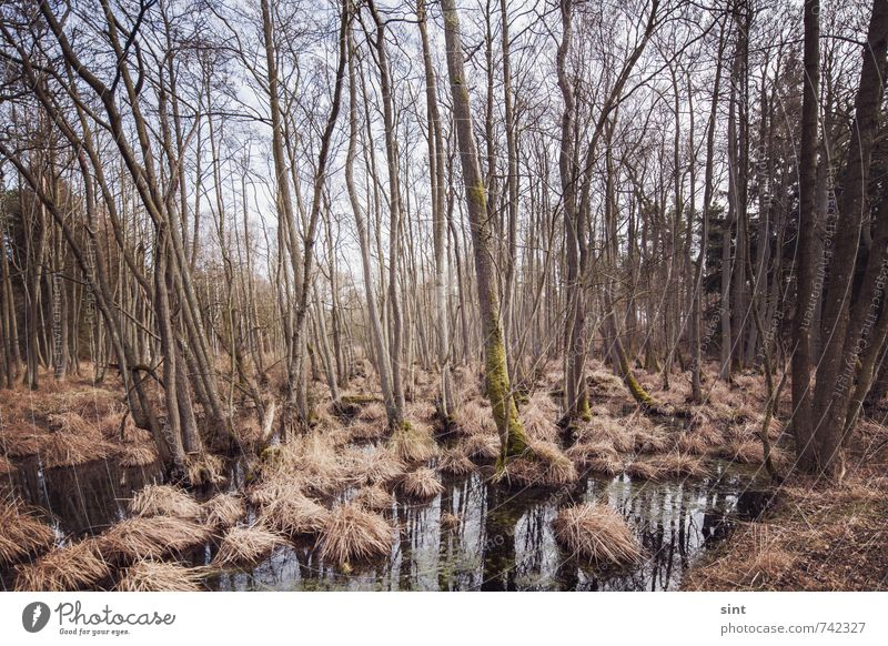 moorlandschaft Ausflug Natur Landschaft Schönes Wetter Wald Moor Sumpf Holz Wasser Erholung Ferien & Urlaub & Reisen wandern dunkel gruselig nachhaltig nass