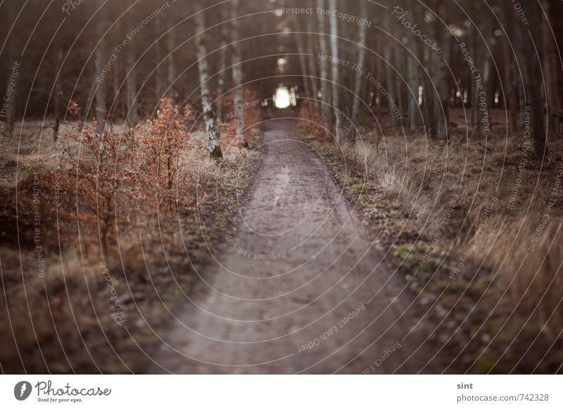 tunnelblick Natur Ferien & Urlaub & Reisen Baum Erholung ruhig Ferne Wald Wege & Pfade natürlich gehen Perspektive wandern Ausflug Abenteuer Hoffnung Ziel