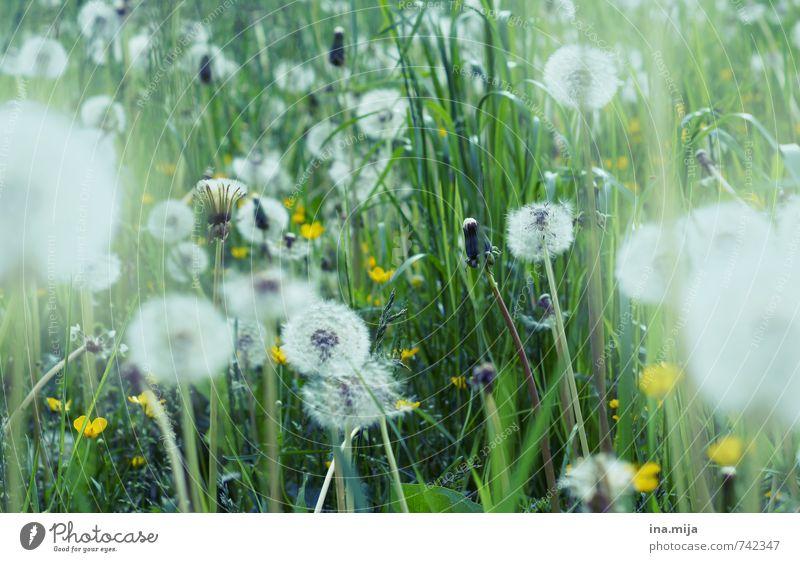 bald fliegen wir davon! Natur grün weiß Pflanze Landschaft Umwelt Wiese Frühling Gras natürlich Garten Park frisch Wandel & Veränderung Vergänglichkeit Punkt