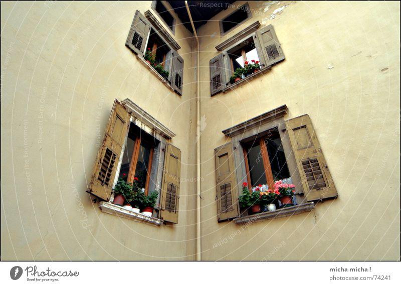 eng Blume Haus Wand Fenster braun Italien Röhren beige Fensterladen Gardasee