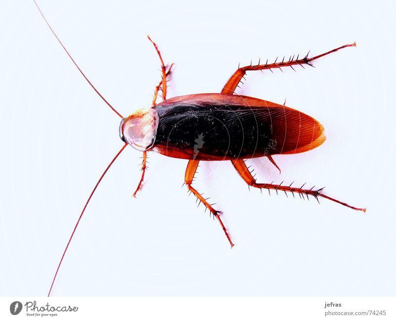 cockroach Ferien & Urlaub & Reisen Körperhaltung Müll Zerstörung Plage Schädlinge attackieren vernichten