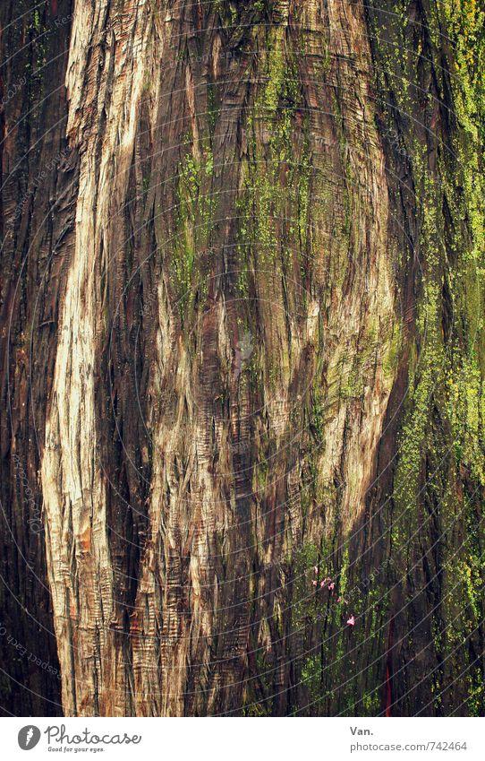 Naturkunst Baum Moos Baumrinde braun grün Strukturen & Formen Hintergrundbild Farbfoto mehrfarbig Außenaufnahme Detailaufnahme Menschenleer Tag Kontrast