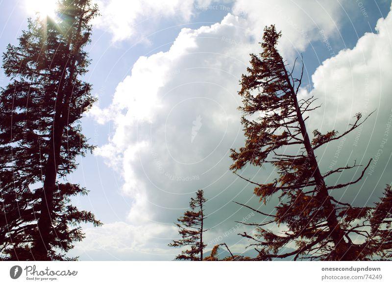 Look up in the sky schön Himmel Baum Sonne Sommer Wolken oben Berge u. Gebirge grau Wetter hoch Niveau Ast Alpen Lebensfreude Baumstamm