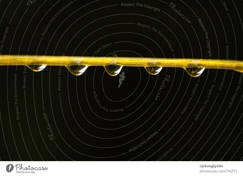 tropfen #2 Wäscheleine Schnur gelb Regen Tau Wassertropfen Herbst Reflexion & Spiegelung Baum 5 Gesellschaft (Soziologie) Zusammenhalt Seil Morgen mehrere